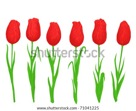illustration of six tulips on