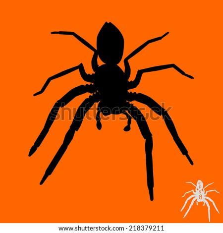 illustration of spider  spider