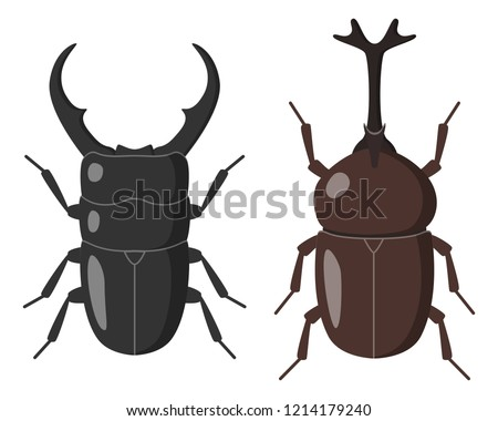illustration of stag beetle and