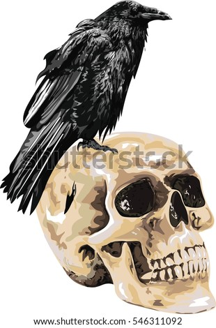 illustration of the black raven