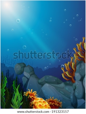 illustration of the corals and
