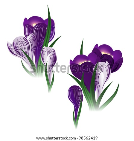 illustration of the crocus