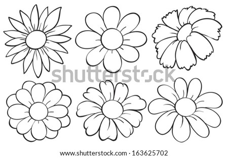 illustration of the flowers in