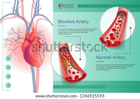 Illustration of the human circulatory vascular system template. anatomical heart. man body parts. Hand drown vector sketch illustration isolated