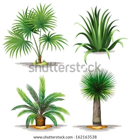 illustration of the palm plants