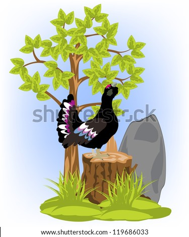 Illustration of the timber bird black grouse on white background is insulated