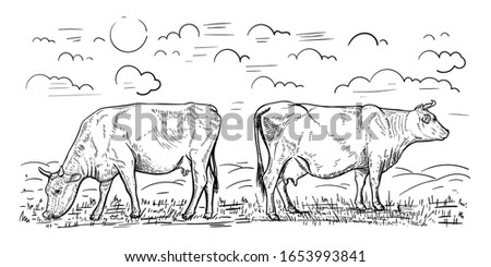 illustration of two cows that