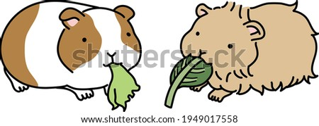 illustration of two guinea pigs
