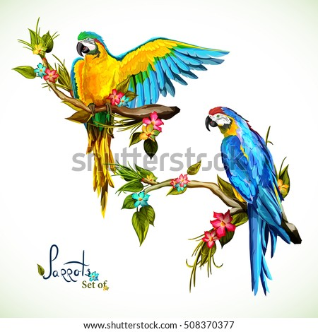 illustration of two parrots on