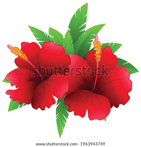 illustration of two red flowers