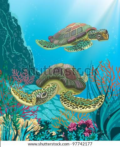 illustration of two sea turtles