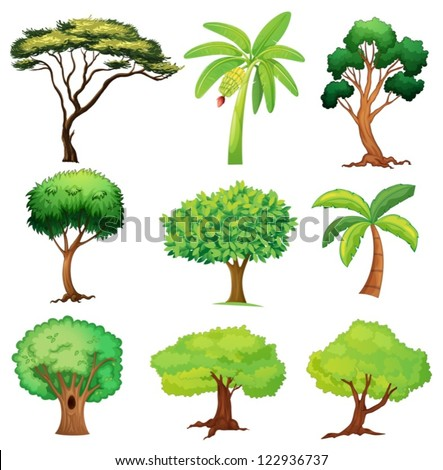 illustration of various trees