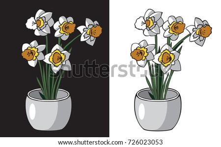 illustration on white and black background flower Narcissus in a pot