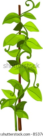 illustration plant and flower