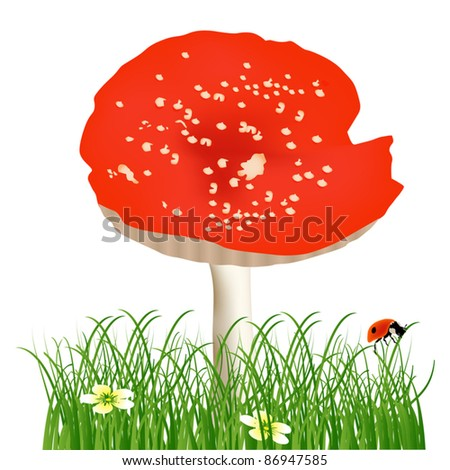 illustration red single fly-agaric in green grass