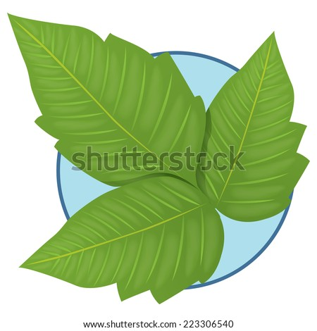 Illustration representing Nature Plant Poison Ivy