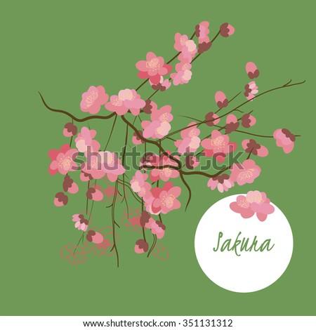 illustration sakura flower
