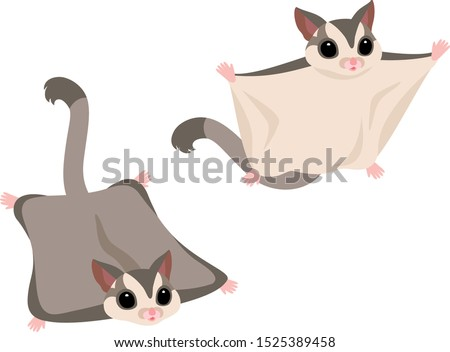 Illustration set of flying Sugar Gliders (gray) Сток-фото ©