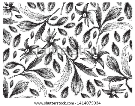 Illustration Wallpaper of Hand Drawn Sketch of Borage Seeds and Blossoms on Tree Branch. The Highest Amounts of Y-Linolenic Acid or GLA of Seed Oils. Zdjęcia stock ©