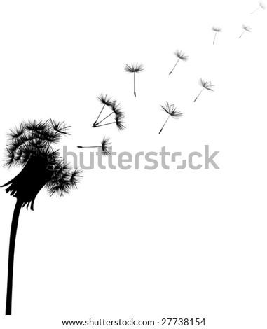 illustration with black dandelion on white background