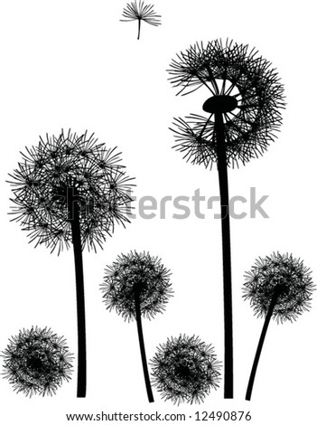 illustration with black dandelions on white background