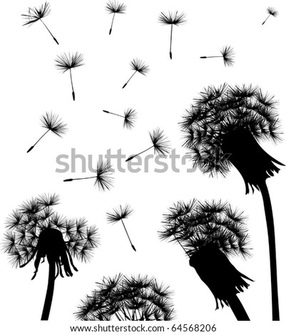 illustration with black dandelions on white background - stock vector