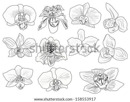 Illustration With Black Orchid Flowers Sketches Isolated ...