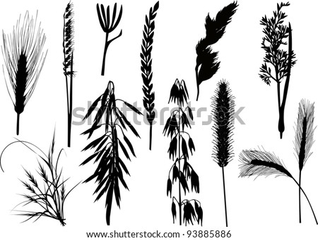 illustration with cereal silhouettes collection isolated on white background