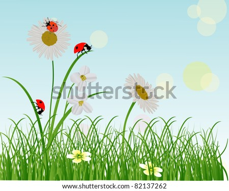 illustration with chamomiles and ladybugs in green grass