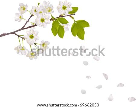 illustration with cherry tree