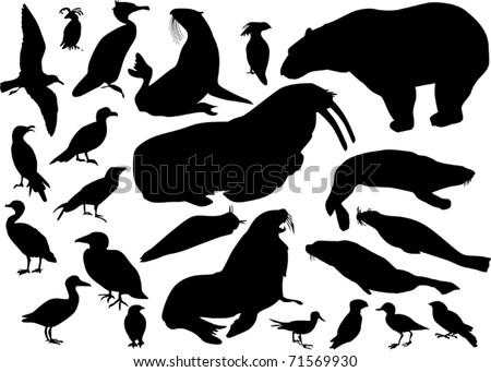 illustration with coastal birds