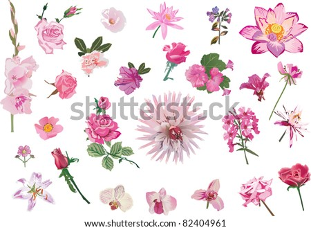illustration with collection of flowers isolated on white background