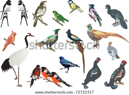 illustration with color birds isolated on white background
