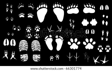 illustration with different animals and human tracks collection