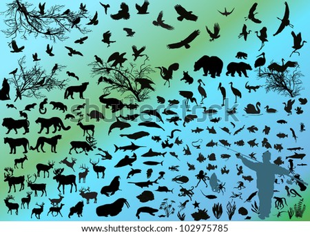 illustration with different animals silhouettes