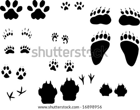 illustration with different animals tracks collection