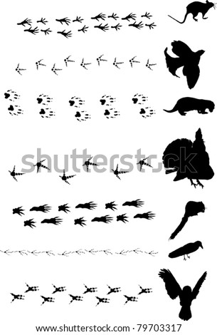 illustration with different birds and animals tracks