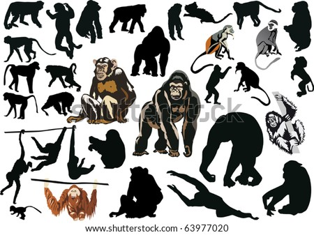 illustration with different monkeys isolated on white background