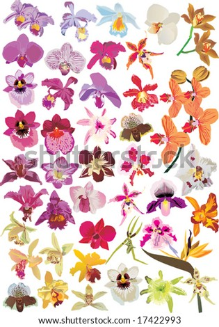 illustration with different orchid collection