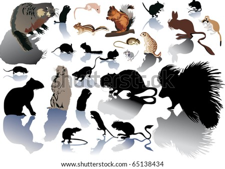 illustration with different rodents isolated on white background