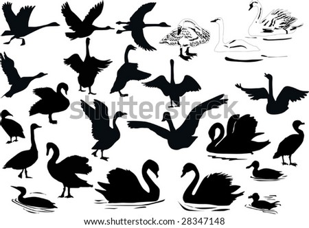 illustration with different swimming birds silhouettes