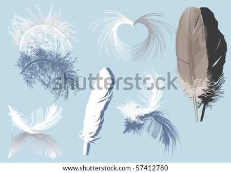 illustration with feathers and shadows isolated on blue background