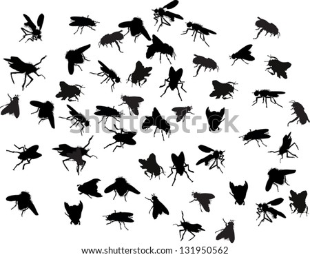 illustration with fly silhouettes isolated on white background