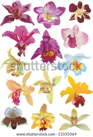illustration with fourteen orchids collection