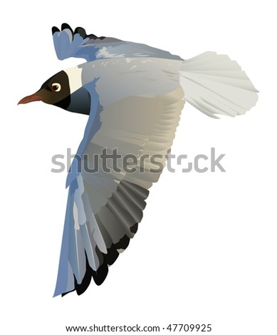 illustration with gull isolated on white background
