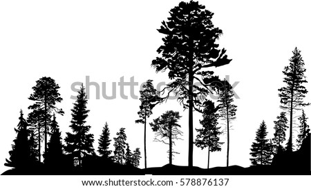 illustration with high pine in
