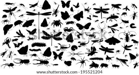 illustration with insect