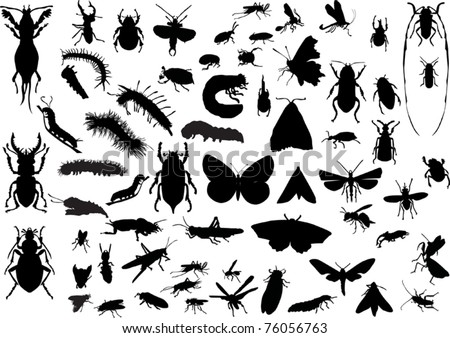 illustration with insect silhouettes isolated on white background