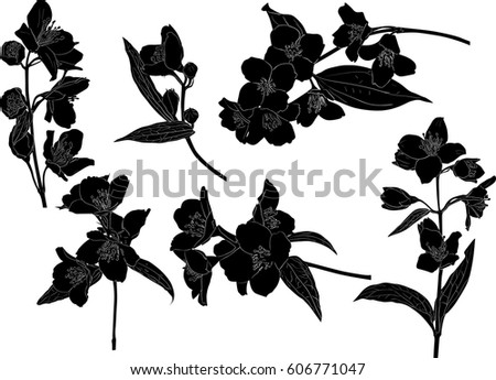 Line Drawing Flower Vector : Free vector flower silhouette download art stock