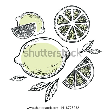 Illustration with lemon, lemon pieces and leaves made in graphic style
